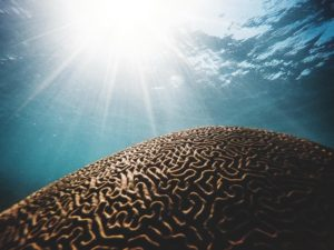 Brain Reef